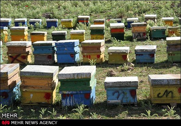 عسل طبیعی پلور لار