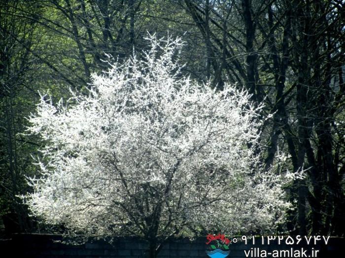 img 9605 - جوربند روستای سر سبز و توریستی