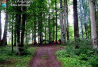 جنگل لاویج