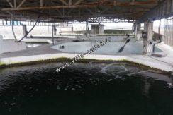 فروش پرورش ماهی